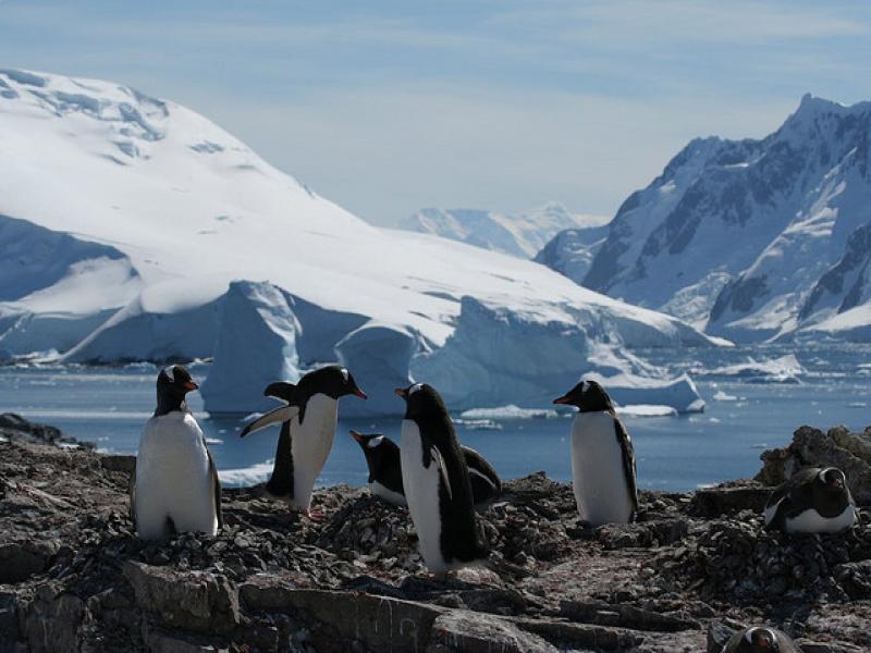 antarctic_01
