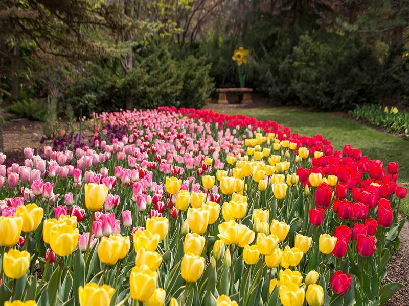 utah-tulip-festival-at-thanksgiving-point